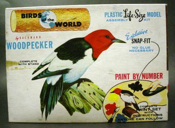 Bachman-woodpecker-started1