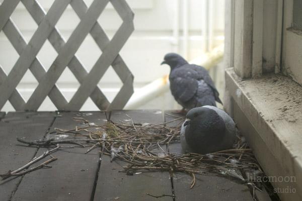 Pigeonnest