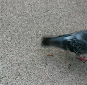 Birdtail